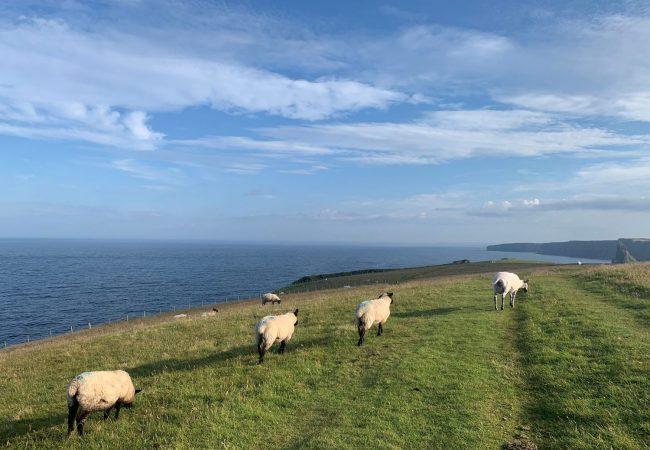 Scoția. În căutarea concediului perfect (6).  Highland – Noi și oi.